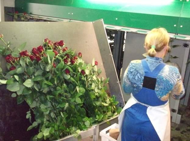 PROMFOTO из ЖЖ: Розариум / ОАО «Мир Цветов» (п. Кадошкино, Республика Мордовия)